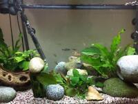 160 litre Jewel Aquarium