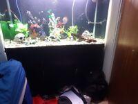 Fish tank 390l 4ft