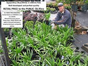 HUGE RANGE OF QUALITY PLANTS - Trade & Public Welcome! A-G Mudgeeraba Gold Coast South Preview