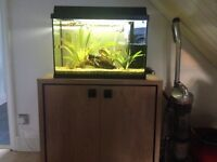 Juwell fish tank and cabinet plus fish!