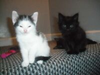 Cheeky confident and very loving 9 week old kittens £30 each
