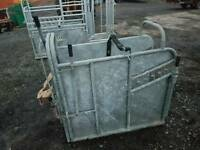 Large iae calf dehorning vaccination crate crush