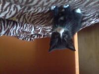 1 male and 1 female kittens