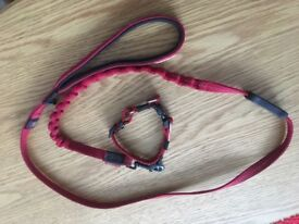 Red shock absorbing lead and collar for puppy or small dog