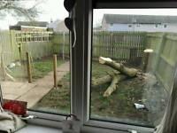 Free fire wood need gone asap free full tree