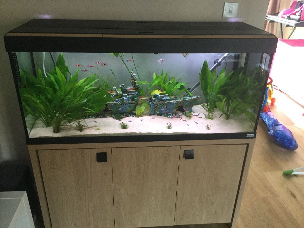 fluval roma 240 litre aquarium in uddingston glasgow gumtree. Black Bedroom Furniture Sets. Home Design Ideas