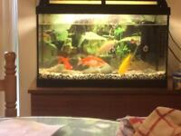 2ft fish tank with light