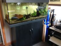 Jewel fish tank and storage base