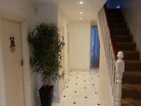 Luxury 5 bedrooms flat - To rent
