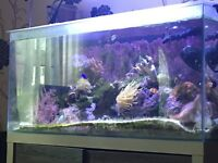 Marine fish tank, corals and fish