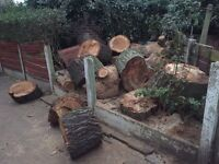 12ft oak wood stumps to be sold any offer need to go ASAP, pick up only based in Manchester