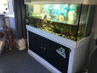 4ft tank and 3 turtles