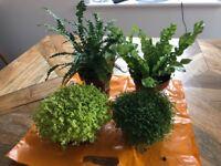 4 Real Plants For A Vivarium
