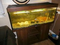 Juwel 4ft Aquarium