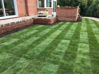 Cultivated turf, top soil. Seeded grass