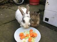 2 cute rabbits for sale