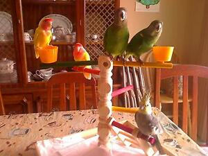 Parrot Groomer Will Clip Wings, Trim Nails and File Beaks Peterborough Peterborough Area image 1