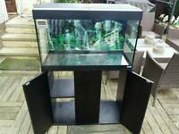 Fluvel 125 fish tank complete with stand hood and lights