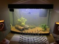 60L insight aquarium