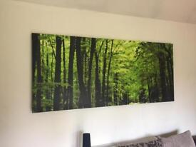 Extra large woodland / forest canvas