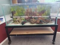 3ft fish tank forsale