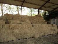 HAY BALES ..SMALL..TRADITIONAL BALES.... HORSES PONIES ETC.