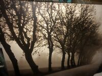Large Canvas Tree Scene picture.