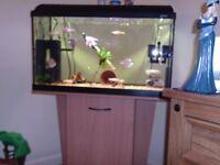2 hafe foot fish tank