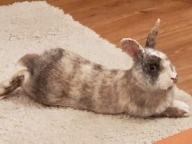 Beautiful male rabbit