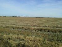 FARM LAND FOR SALE - 160 ACRES - 6 KM EAST OF TOFIELD