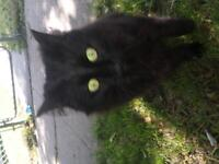 2 free cats adult sweet affectionate