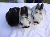 4 Gorgeous friendly baby rabbits