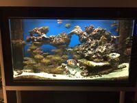 CLEAIR ATLANTIC 630 aquarium tank £750 STUNNING HIGH BLACK GLOSS.