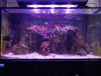 Marine Fish Tanks EA Reef 900 FULL SET-UP