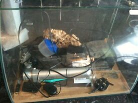 2ft glass tank full set up for spider or sorption all accessories