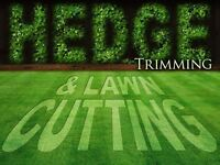 Hedge And Lawn Cuts….