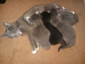 Adorable fluffy kittens