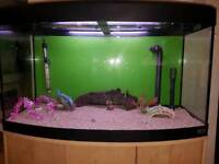 3ft FLUVAL bow fronted fish tank and Stand For Sale full set up with external filter