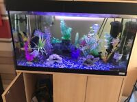 Want gone make me a sensible offer 150 litre tank with cabinet