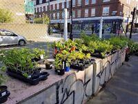 plants for sale vauxhall central London garden centre
