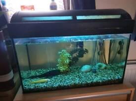 Fish tank marina 60 litres