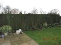 Wooden Fence Panels 5x 6'x6' and 6x 6'x3'plus graduated panel