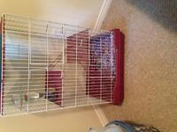 Two rats and large eat cage