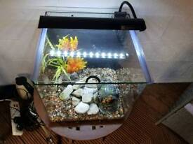 tropical fish tank with heater and filter
