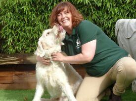 Pet Nanny Fulham - Dog Walking/Walker & Cat Sitting/Sitter Services