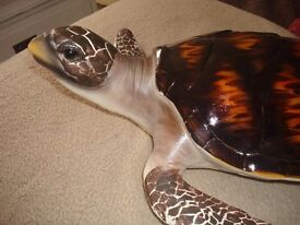 """LARGE TURTLE VERY CUTE FACE SIZE IS 19"""" LONG X 18"""" WIDE INCLUDING THE FINS"""