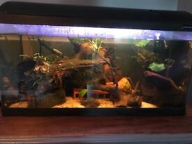 Fish tank full set up job lot