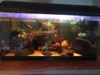 Fish tank full set up job lot