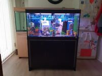 Fluval Roma 200 aquarium and cabinet. absolutely immaculate condition £250.00
