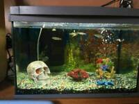 Fish tank full set up with 8 fish